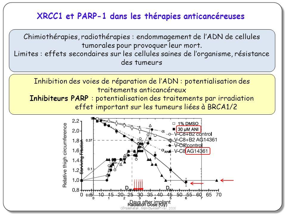 Chimiothérapies, radiothérapies : endommagement de lADN de cellules tumorales pour provoquer leur mort. Limites : effets secondaires sur les cellules