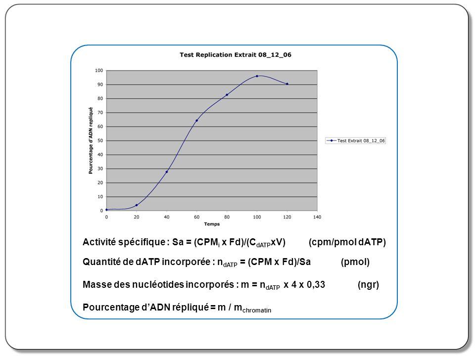 Activité spécifique : Sa = (CPM i x Fd)/(C dATP xV) (cpm/pmol dATP) Quantité de dATP incorporée : n dATP = (CPM x Fd)/Sa (pmol) Masse des nucléotides
