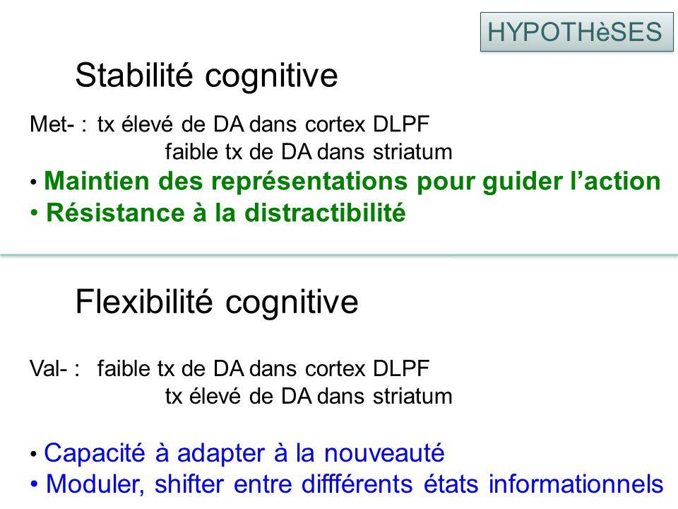 Stabilité cognitive Val- :faible tx de DA dans cortex DLPF tx élevé de DA dans striatum Capacité à adapter à la nouveauté Moduler, shifter entre difff