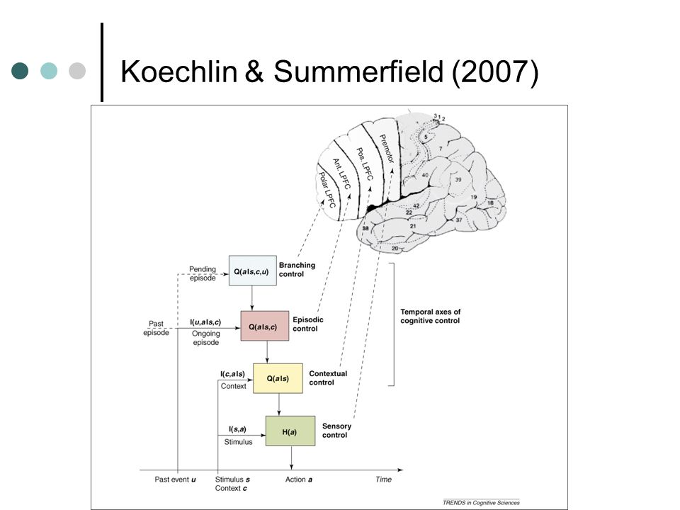 Koechlin & Summerfield (2007)