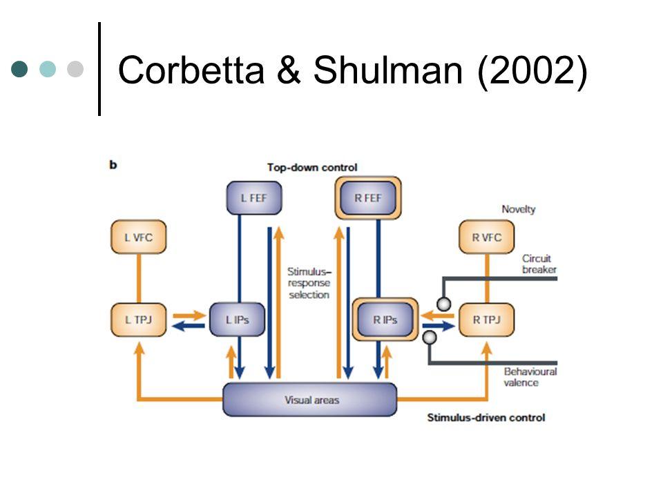 Corbetta & Shulman (2002)