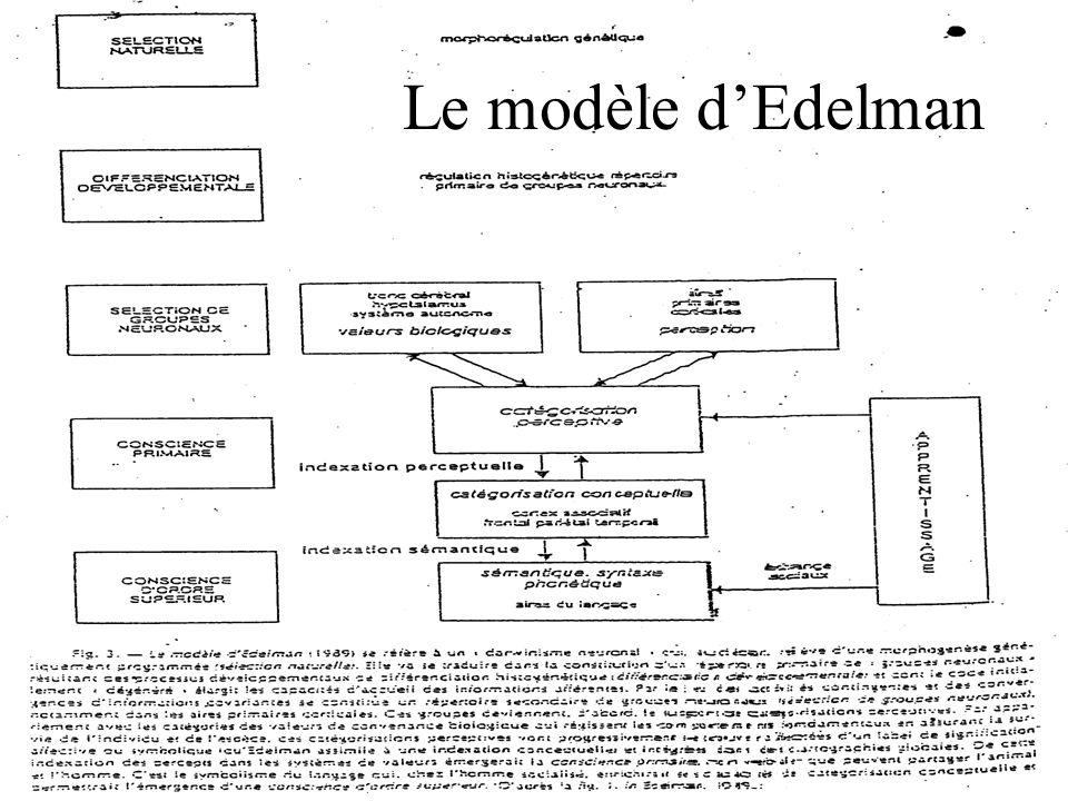 Le modèle dEdelman