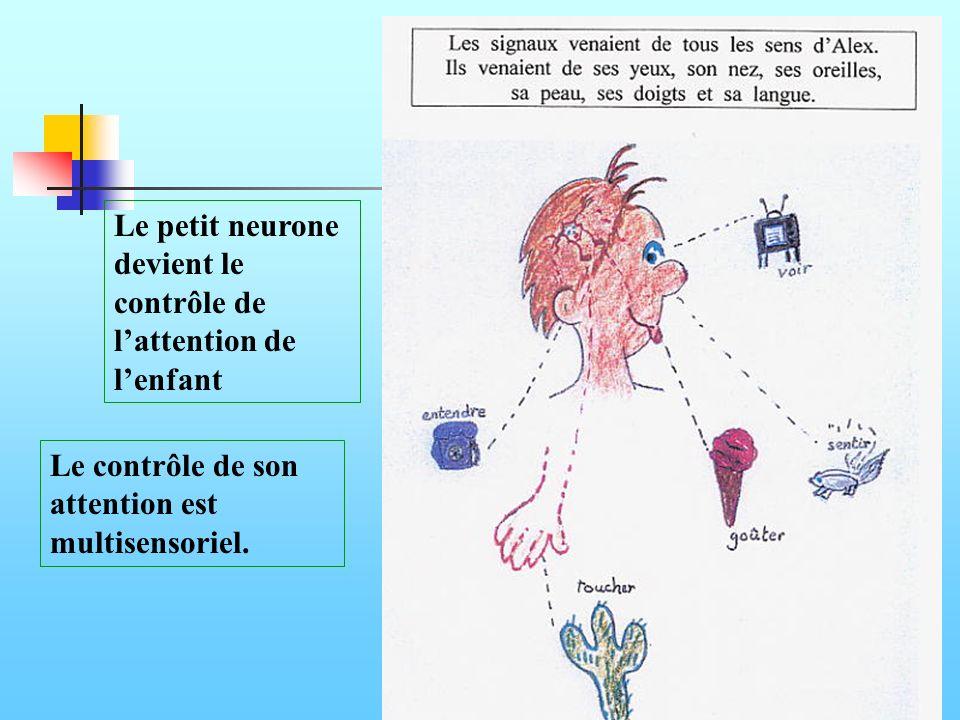 Le contrôle de son attention est multisensoriel. Le petit neurone devient le contrôle de lattention de lenfant
