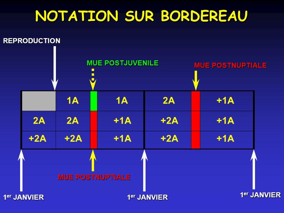 NOTATION SUR BORDEREAU MUE POSTJUVENILE MUE POSTNUPTIALE REPRODUCTION 1 er JANVIER MUE POSTNUPTIALE 1 er JANVIER 1A 2A+1A 2A +1A+2A+1A +2A +1A+2A+1A