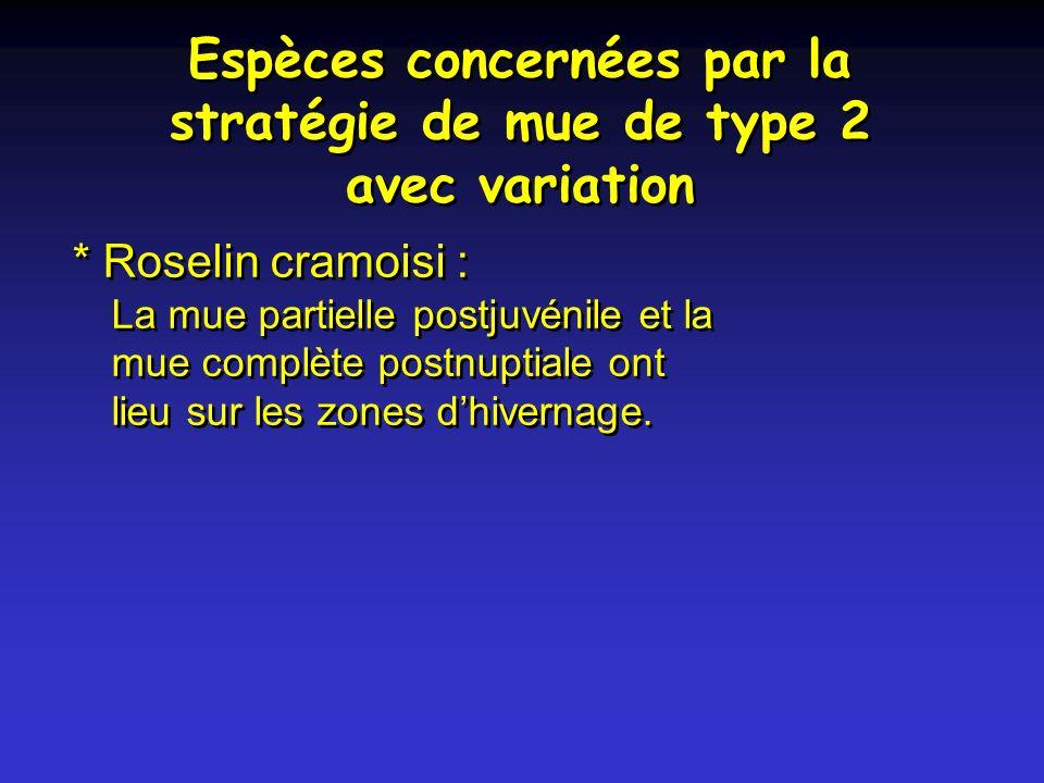 Espèces concernées par la stratégie de mue de type 2 avec variation * Roselin cramoisi : La mue partielle postjuvénile et la mue complète postnuptiale ont lieu sur les zones dhivernage.