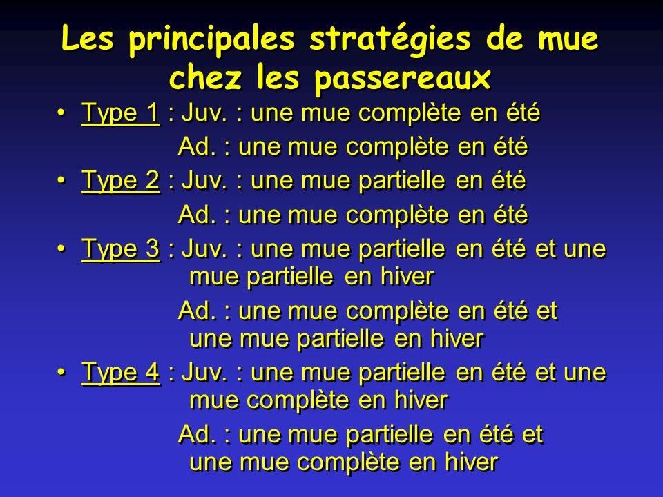 Les principales stratégies de mue chez les passereaux Type 1 : Juv.