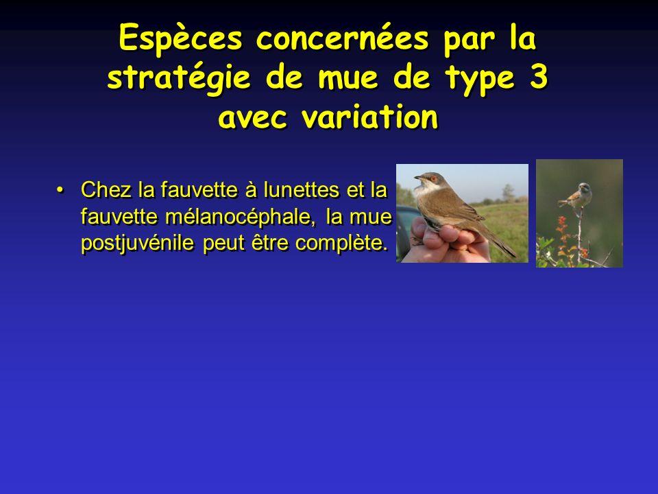 Espèces concernées par la stratégie de mue de type 3 avec variation Chez la fauvette à lunettes et la fauvette mélanocéphale, la mue postjuvénile peut être complète.