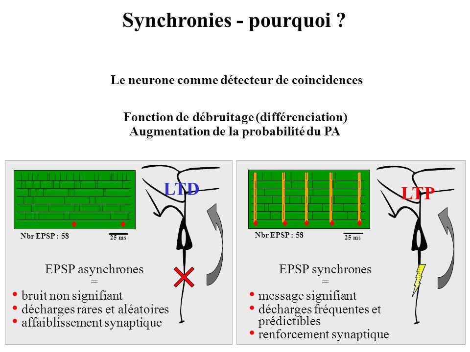 Synchronies - pourquoi ? Fonction de débruitage (différenciation) Augmentation de la probabilité du PA | | | | || | | | | | | | ||| | | | | | | | || |