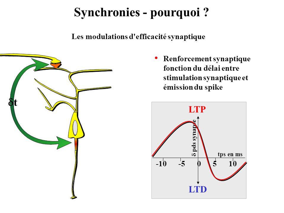 Synchronies - pourquoi ? Les modulations d'efficacité synaptique t 0-5-10105 tps en ms pds synapse LTP LTD Renforcement synaptique fonction du délai e
