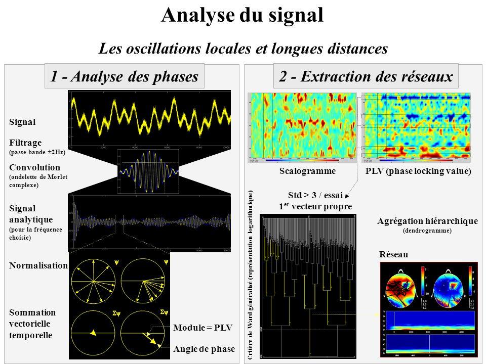 Les oscillations locales et longues distances 1 - Analyse des phases Signal Filtrage (passe bande 2Hz) Signal analytique (pour la fréquence choisie) M