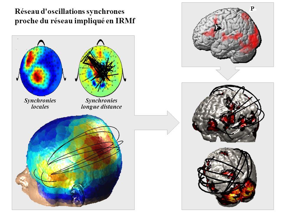 F P Réseau d'oscillations synchrones proche du réseau impliqué en IRMf Synchronies locales Synchronies longue distance