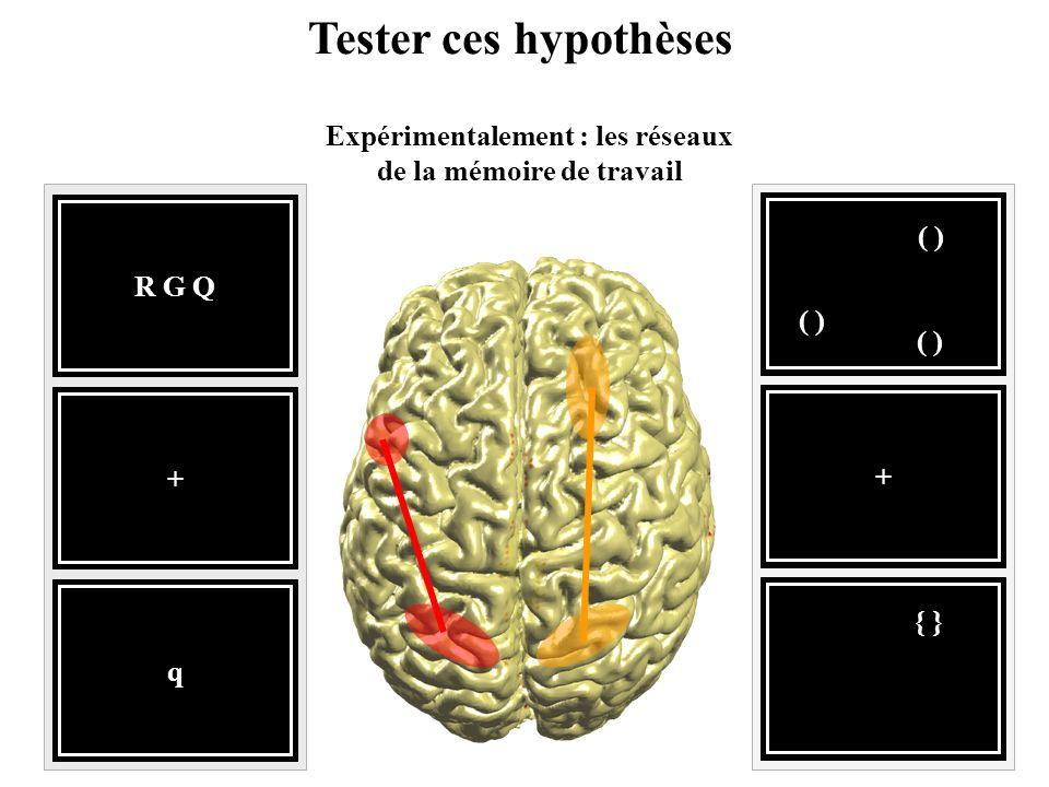 Tester ces hypothèses Expérimentalement : les réseaux de la mémoire de travail R G Q q + ( ) { } +