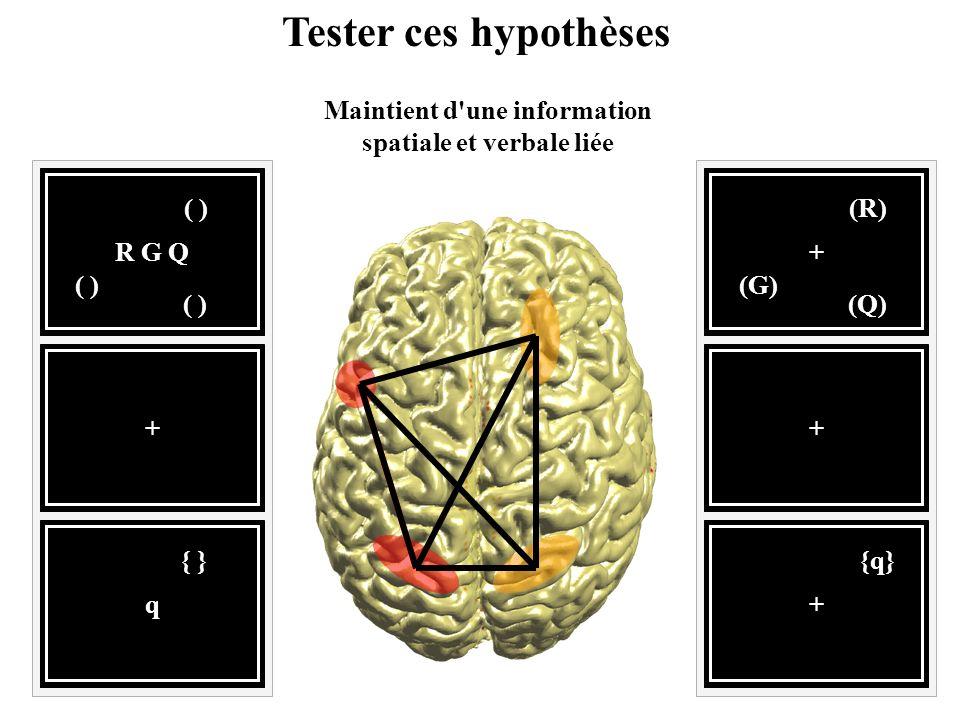 + (Q) (R) (G) + {q} + R G Q ( ) q { } + Tester ces hypothèses Maintient d'une information spatiale et verbale liée