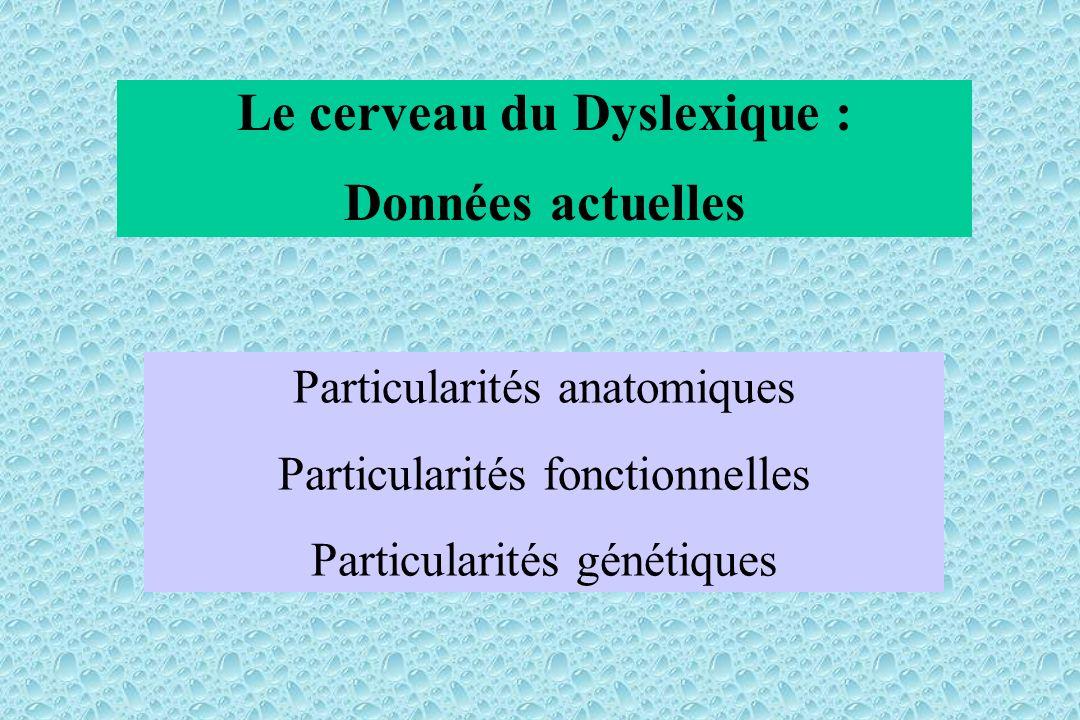 Le cerveau du Dyslexique : Données actuelles Particularités anatomiques Particularités fonctionnelles Particularités génétiques