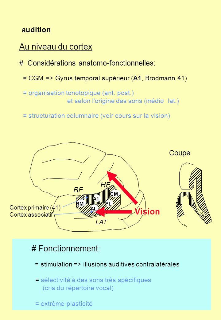 audition Au niveau du cortex # Considérations anatomo-fonctionnelles: = CGM => Gyrus temporal supérieur (A1, Brodmann 41) = organisation tonotopique (