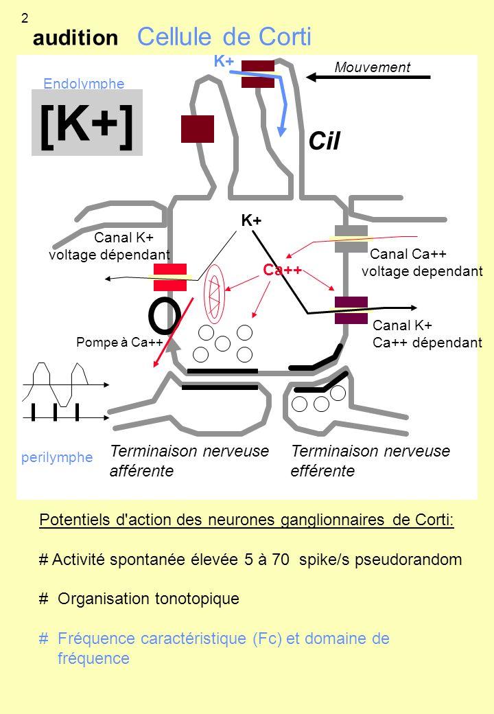 Potentiels d'action des neurones ganglionnaires de Corti: # Activité spontanée élevée 5 à 70 spike/s pseudorandom # Organisation tonotopique # Fréquen