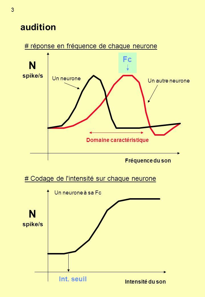 audition N spike/s Fréquence du son Fc Domaine caractéristique Un neurone Un autre neurone N spike/s Intensité du son Un neurone à sa Fc Int. seuil #