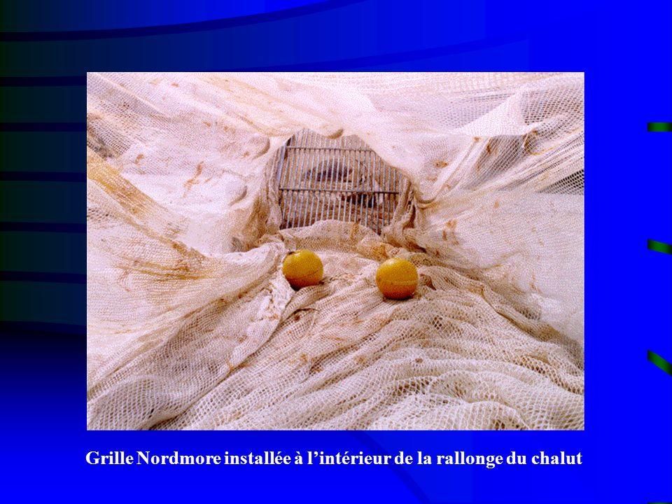 Grille Nordmore installée à lintérieur de la rallonge du chalut