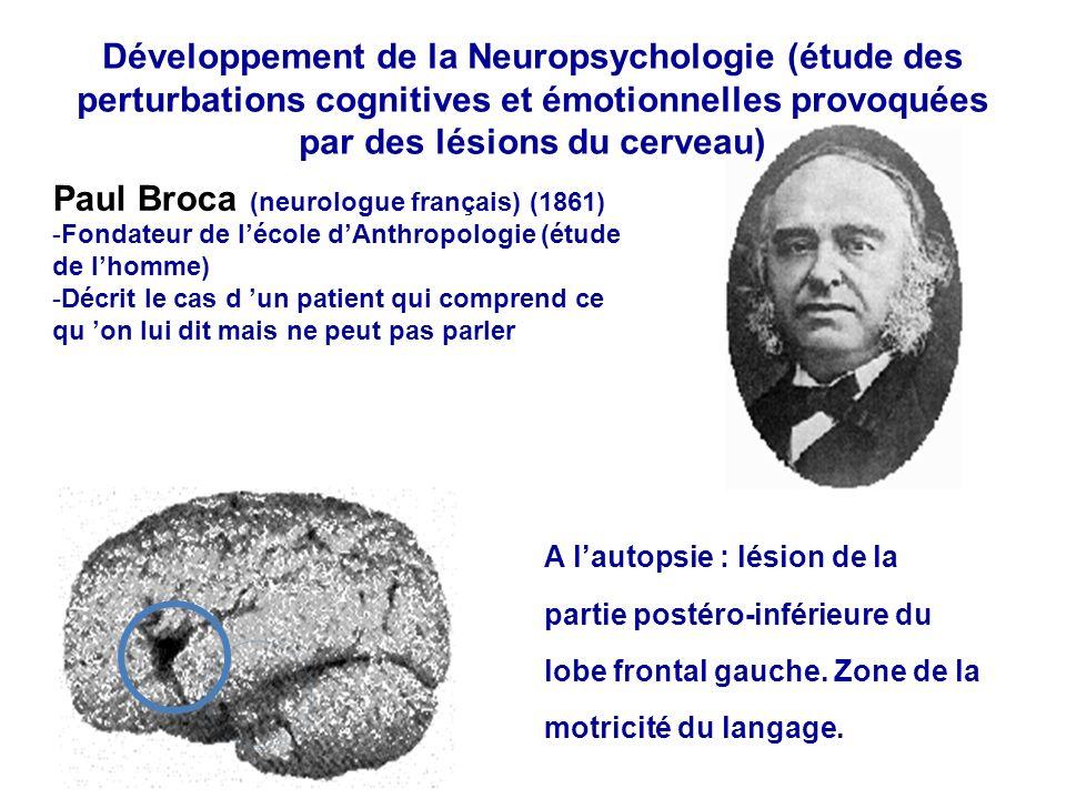 Paul Broca (neurologue français) (1861) -Fondateur de lécole dAnthropologie (étude de lhomme) -Décrit le cas d un patient qui comprend ce qu on lui di
