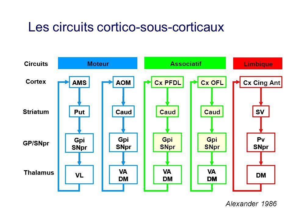 Alexander 1986 Les circuits cortico-sous-corticaux