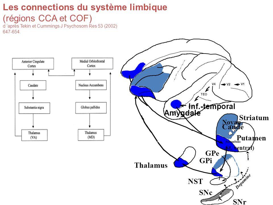 Les connections du système limbique (régions CCA et COF) d après Tekin et Cummings J Psychosom Res 53 (2002) 647-654.