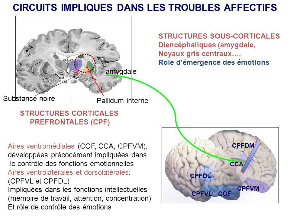Pallidum interne Substance noire COF CPFVM CPFDL CCA CPFDM STRUCTURES CORTICALES PREFRONTALES (CPF) CPFVL Aires ventromédiales (COF, CCA, CPFVM): déve