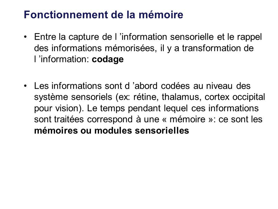 Fonctionnement de la mémoire Entre la capture de l information sensorielle et le rappel des informations mémorisées, il y a transformation de l inform