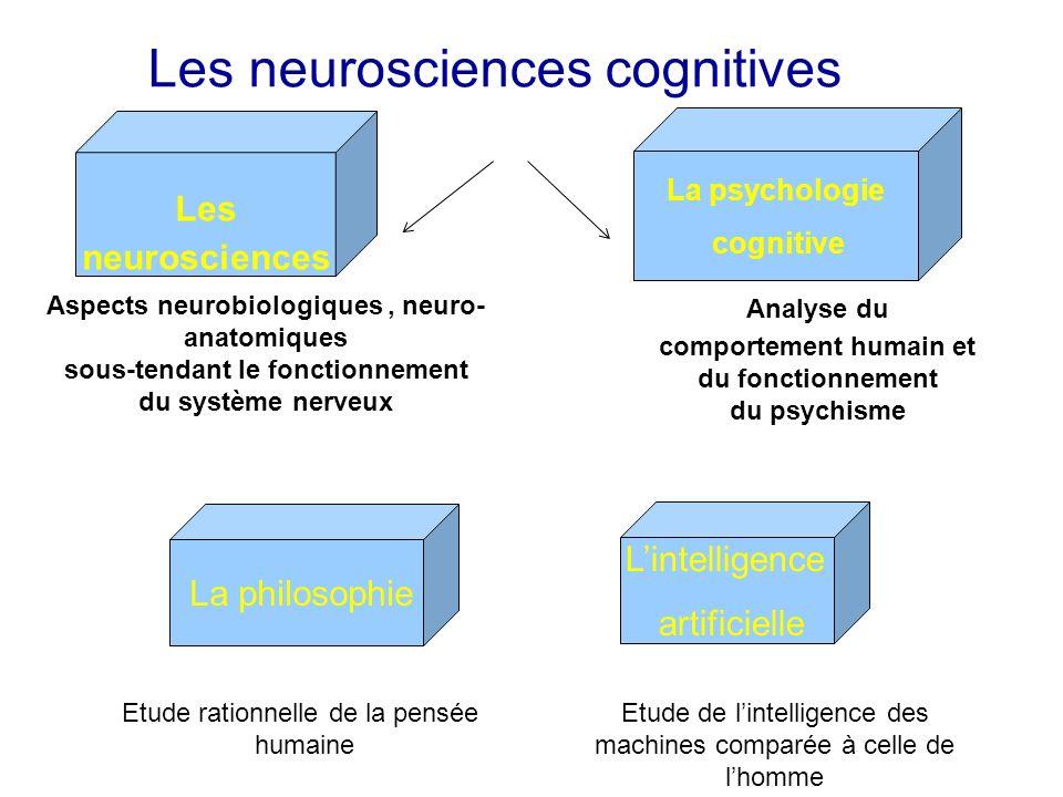 Les neurosciences cognitives La psychologie cognitive Les neurosciences Lintelligence artificielle La philosophie Analyse du comportement humain et du