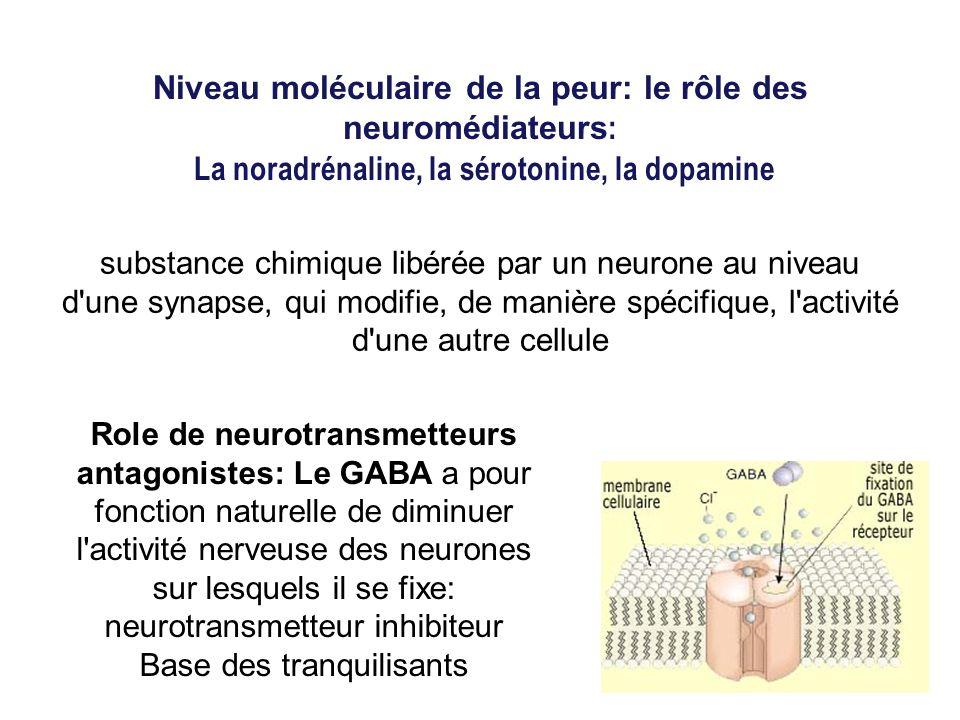 Niveau moléculaire de la peur: le rôle des neuromédiateurs : La noradrénaline, la sérotonine, la dopamine Role de neurotransmetteurs antagonistes: Le