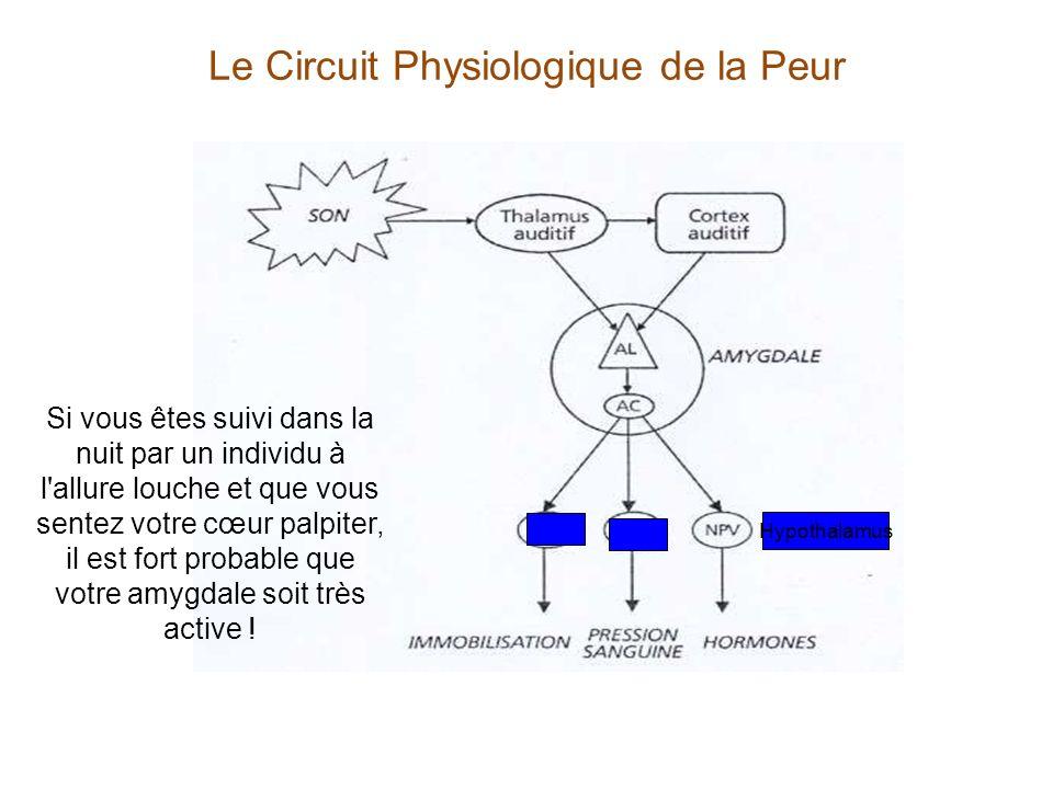 Le Circuit Physiologique de la Peur Hypothalamus Si vous êtes suivi dans la nuit par un individu à l'allure louche et que vous sentez votre cœur palpi