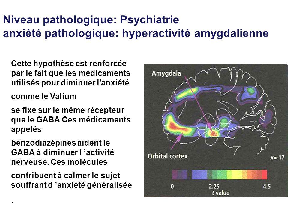 Niveau pathologique: Psychiatrie anxiété pathologique: hyperactivité amygdalienne Cette hypothèse est renforcée par le fait que les médicaments utilis