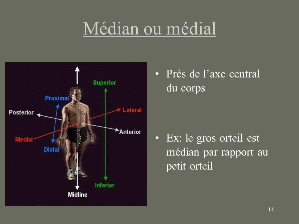 11 Médian ou médial Près de laxe central du corps Ex: le gros orteil est médian par rapport au petit orteil