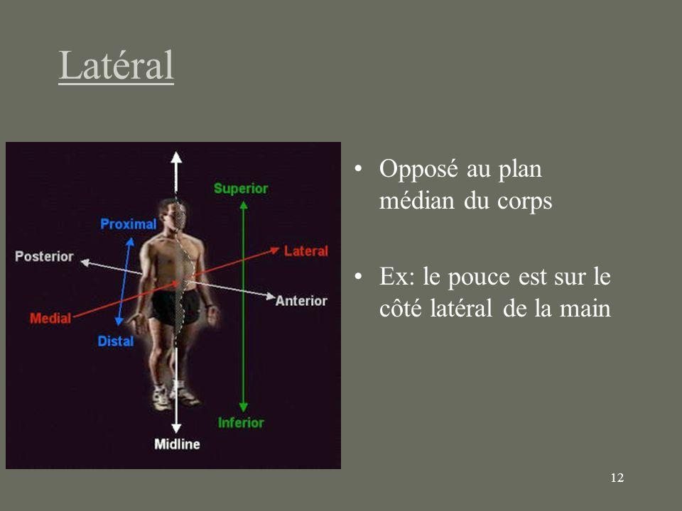 12 Latéral Opposé au plan médian du corps Ex: le pouce est sur le côté latéral de la main