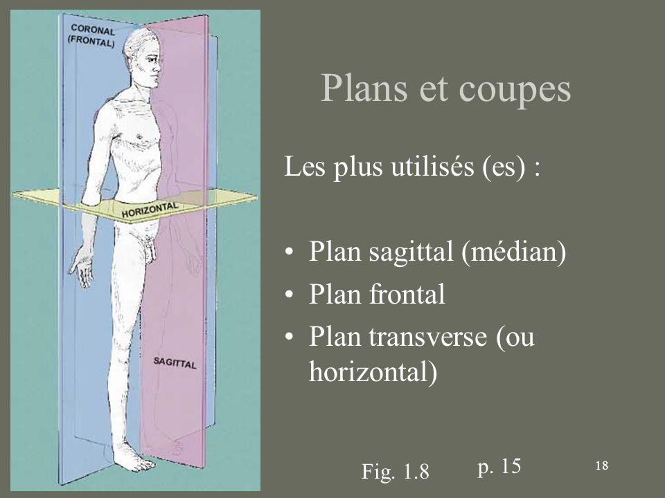 18 Plans et coupes Les plus utilisés (es) : Plan sagittal (médian) Plan frontal Plan transverse (ou horizontal) Fig. 1.8 p. 15