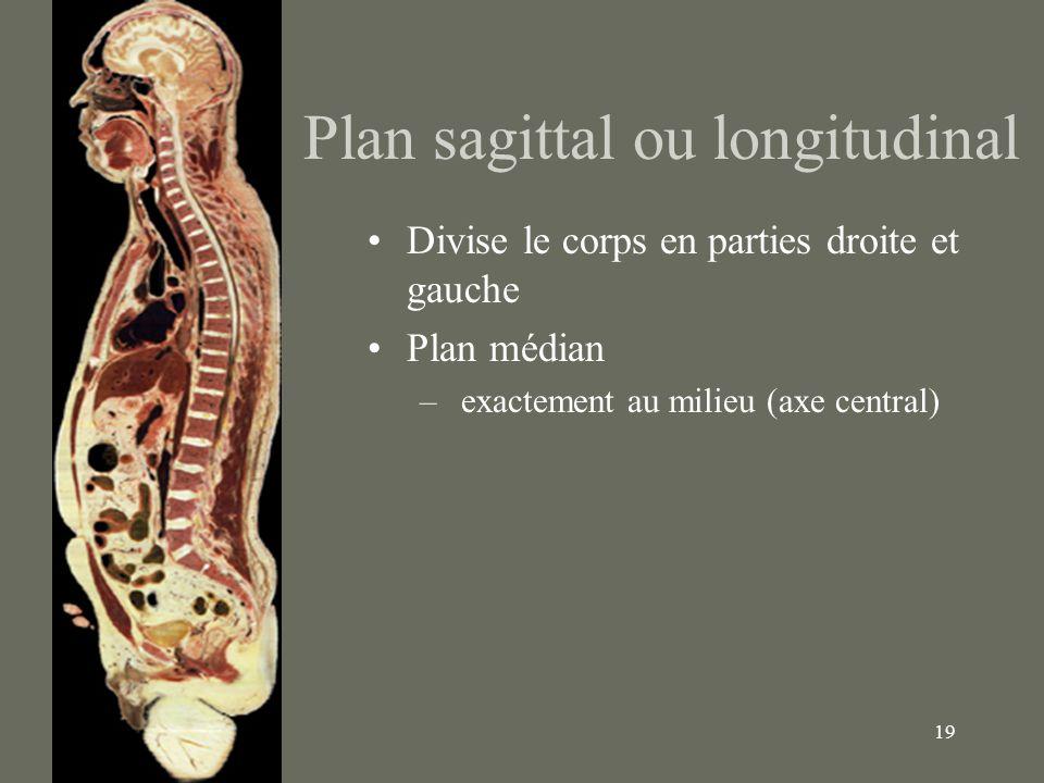 19 Plan sagittal ou longitudinal Divise le corps en parties droite et gauche Plan médian – exactement au milieu (axe central)