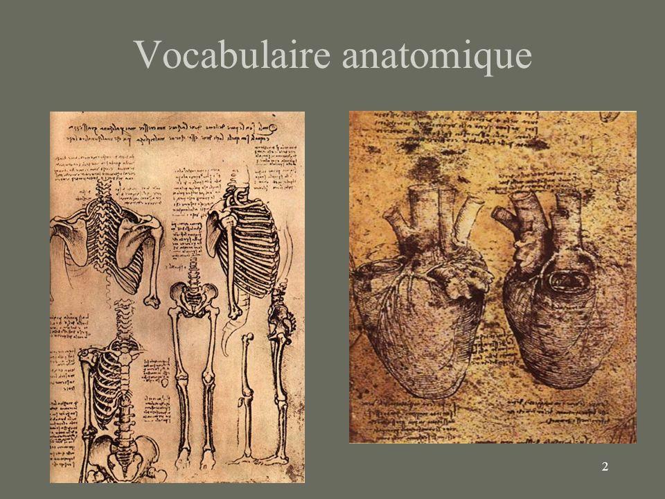 3 Position Anatomique Position de référence –Standard pour tous les ouvrages de biologie Attention aux mains .