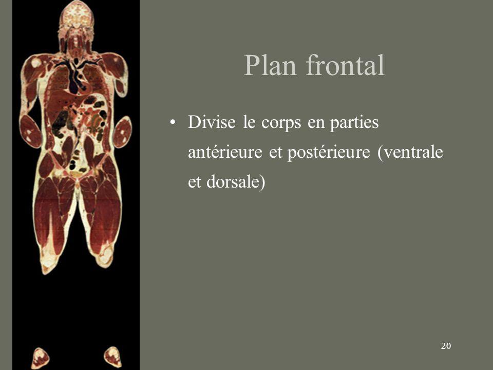 20 Plan frontal Divise le corps en parties antérieure et postérieure (ventrale et dorsale)