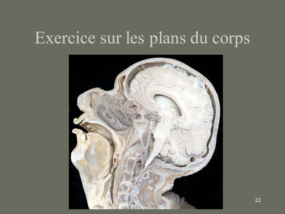 22 Exercice sur les plans du corps
