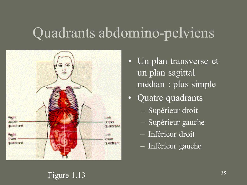 35 Quadrants abdomino-pelviens Un plan transverse et un plan sagittal médian : plus simple Quatre quadrants –Supérieur droit –Supérieur gauche –Inféri
