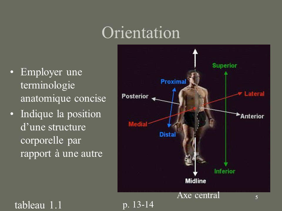 5 Orientation Employer une terminologie anatomique concise Indique la position dune structure corporelle par rapport à une autre tableau 1.1 Axe centr