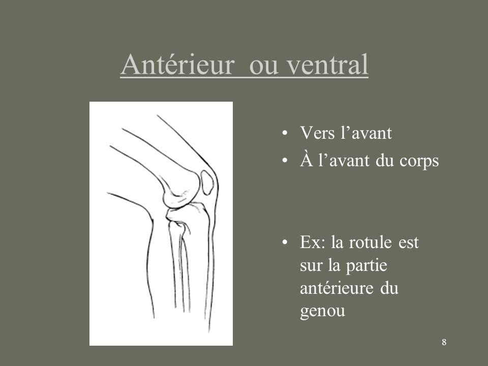 8 Antérieur ou ventral Vers lavant À lavant du corps Ex: la rotule est sur la partie antérieure du genou