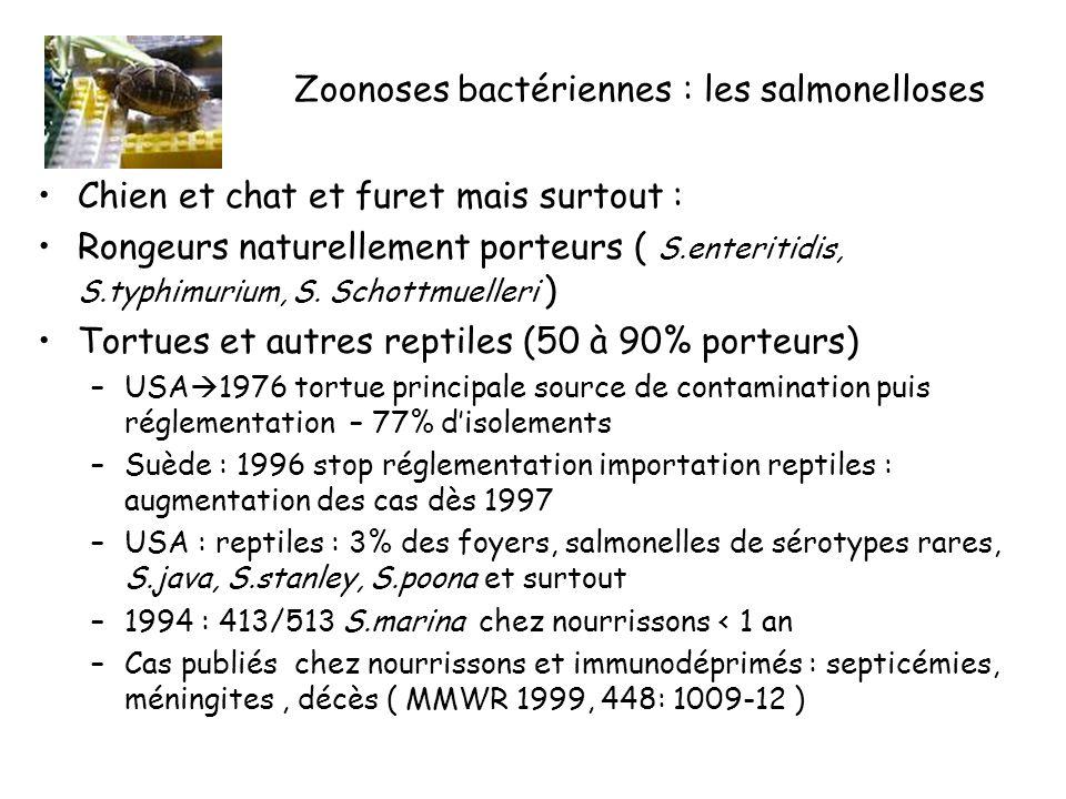 Zoonoses bactériennes : les salmonelloses Chien et chat et furet mais surtout : Rongeurs naturellement porteurs ( S.enteritidis, S.typhimurium, S.