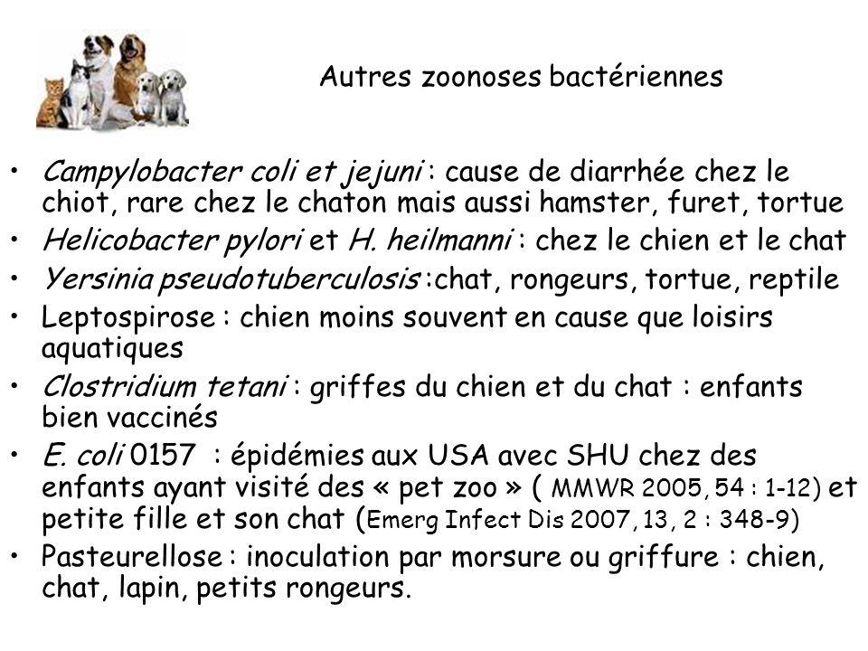 Autres zoonoses bactériennes Campylobacter coli et jejuni : cause de diarrhée chez le chiot, rare chez le chaton mais aussi hamster, furet, tortue Helicobacter pylori et H.