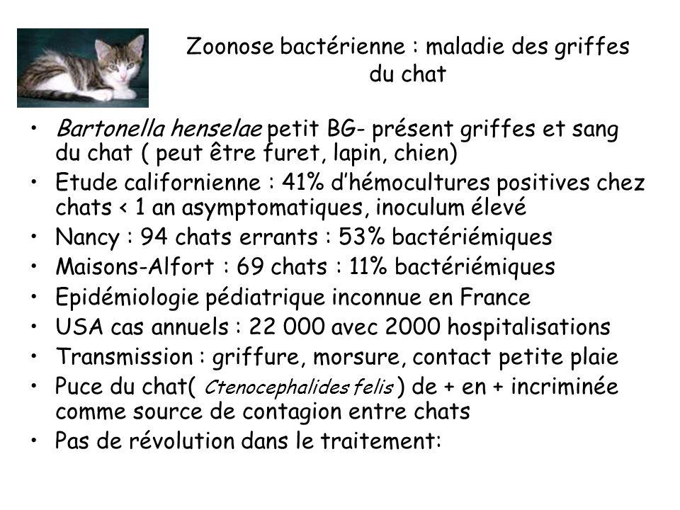 Zoonose bactérienne : maladie des griffes du chat Bartonella henselae petit BG- présent griffes et sang du chat ( peut être furet, lapin, chien) Etude californienne : 41% dhémocultures positives chez chats < 1 an asymptomatiques, inoculum élevé Nancy : 94 chats errants : 53% bactériémiques Maisons-Alfort : 69 chats : 11% bactériémiques Epidémiologie pédiatrique inconnue en France USA cas annuels : 22 000 avec 2000 hospitalisations Transmission : griffure, morsure, contact petite plaie Puce du chat( Ctenocephalides felis ) de + en + incriminée comme source de contagion entre chats Pas de révolution dans le traitement: