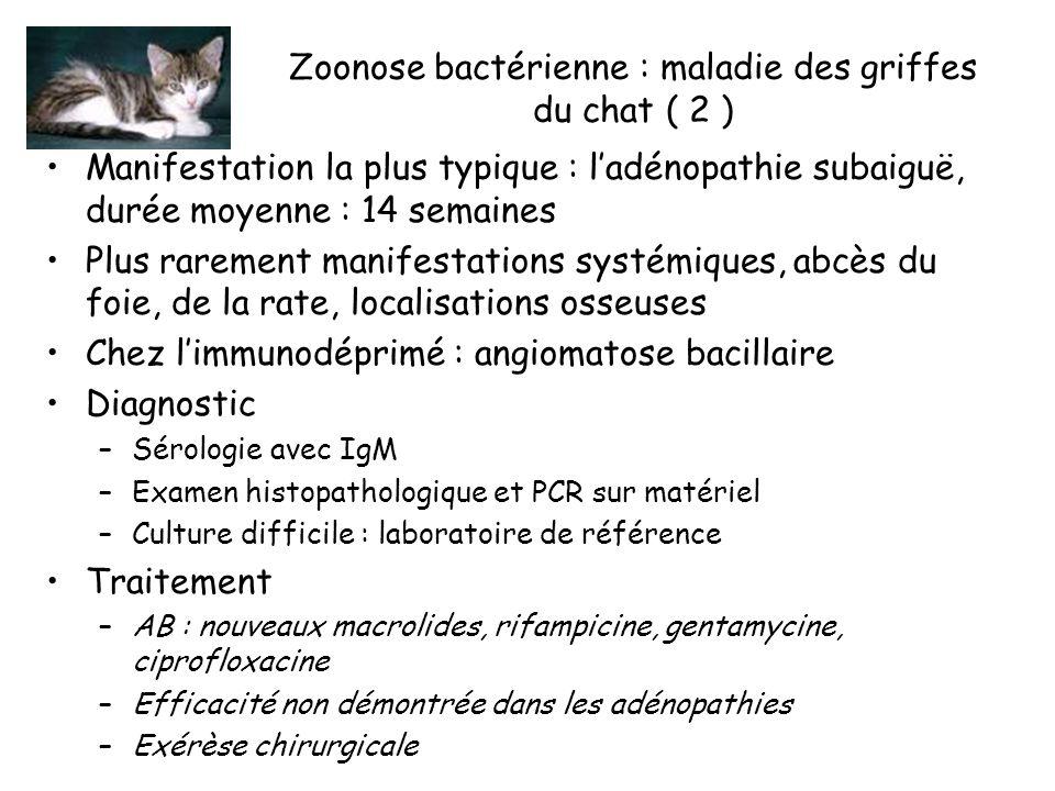Zoonose bactérienne : maladie des griffes du chat ( 2 ) Manifestation la plus typique : ladénopathie subaiguë, durée moyenne : 14 semaines Plus rarement manifestations systémiques, abcès du foie, de la rate, localisations osseuses Chez limmunodéprimé : angiomatose bacillaire Diagnostic –Sérologie avec IgM –Examen histopathologique et PCR sur matériel –Culture difficile : laboratoire de référence Traitement –AB : nouveaux macrolides, rifampicine, gentamycine, ciprofloxacine –Efficacité non démontrée dans les adénopathies –Exérèse chirurgicale
