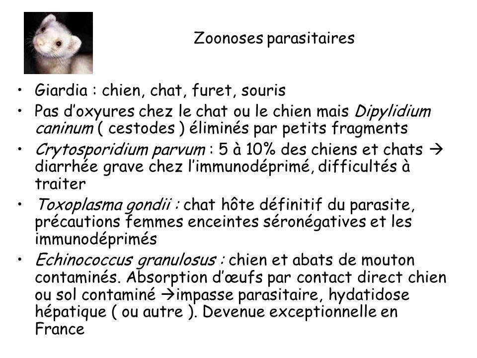 Zoonoses parasitaires Giardia : chien, chat, furet, souris Pas doxyures chez le chat ou le chien mais Dipylidium caninum ( cestodes ) éliminés par petits fragments Crytosporidium parvum : 5 à 10% des chiens et chats diarrhée grave chez limmunodéprimé, difficultés à traiter Toxoplasma gondii : chat hôte définitif du parasite, précautions femmes enceintes séronégatives et les immunodéprimés Echinococcus granulosus : chien et abats de mouton contaminés.
