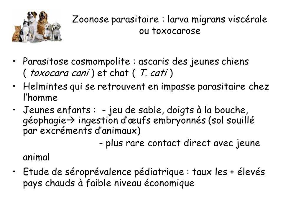 Zoonose parasitaire : larva migrans viscérale ou toxocarose Parasitose cosmompolite : ascaris des jeunes chiens ( toxocara cani ) et chat ( T.