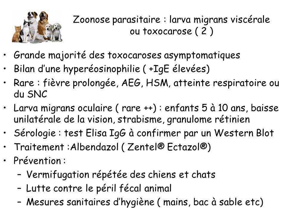 Zoonose parasitaire : larva migrans viscérale ou toxocarose ( 2 ) Grande majorité des toxocaroses asymptomatiques Bilan dune hyperéosinophilie ( +IgE élevées) Rare : fièvre prolongée, AEG, HSM, atteinte respiratoire ou du SNC Larva migrans oculaire ( rare ++) : enfants 5 à 10 ans, baisse unilatérale de la vision, strabisme, granulome rétinien Sérologie : test Elisa IgG à confirmer par un Western Blot Traitement :Albendazol ( Zentel® Ectazol®) Prévention : –Vermifugation répétée des chiens et chats –Lutte contre le péril fécal animal –Mesures sanitaires dhygiène ( mains, bac à sable etc)