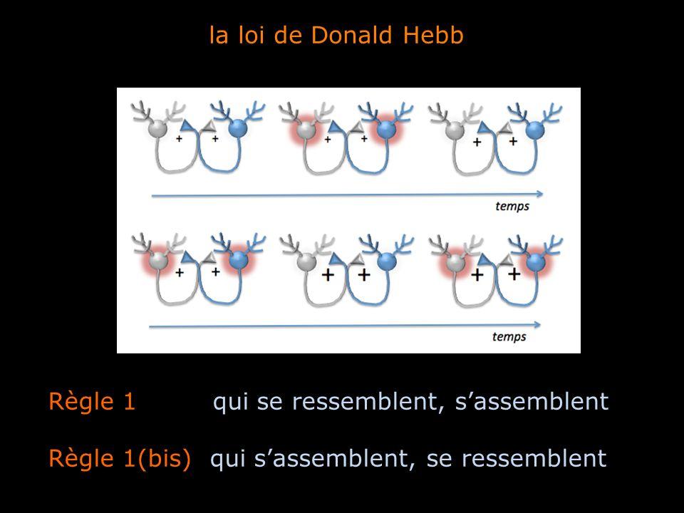 Règle 1 qui se ressemblent, sassemblent Règle 1(bis) qui sassemblent, se ressemblent la loi de Donald Hebb