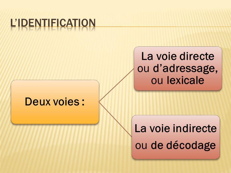 Deux voies : La voie directe ou dadressage, ou lexicale La voie indirecte ou de décodage